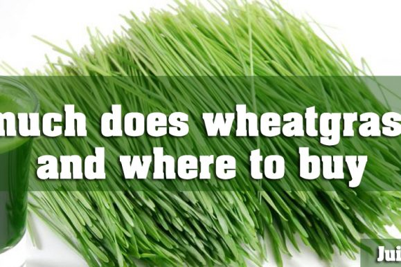 How Much Does Wheatgrass Cost And Where To Buy?
